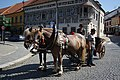 Horse-drawn carriage at UNESCO celebrations in Třebíč, Třebíč District.jpg