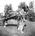Horse-drawn grass cutter, Kinnear Park, Seattle, Washington, September 1897 (KIEHL 291).jpeg