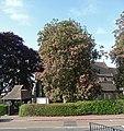 Horse Chestnut, Shirley - geograph.org.uk - 1922465.jpg