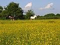 Horses, Hurst - geograph.org.uk - 813757.jpg