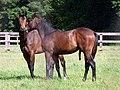 Horses doing what horses do (35520483132).jpg