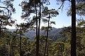 Horteri Nature Trail - panoramio (2).jpg