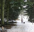 Hundeskov.jpg