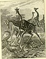 Hunting and trapping stories; a book for boys (1903) (14779301341).jpg