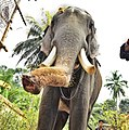 Indian Elephant Photograph by Arun Jayan.jpg