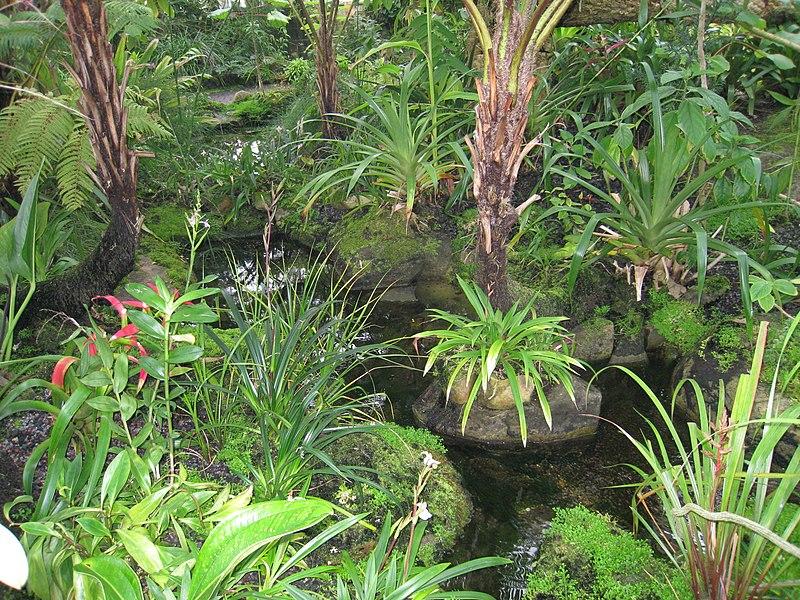 Arquivo: Vista interna - Atlanta Botanical garden.jpg