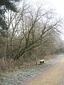 Isolated seat within Havant Thickett - geograph.org.uk - 1114947.jpg