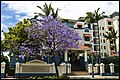 Jacaranda in front of Newstead Appartments-1 (22337365831).jpg