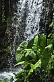 Jardín Botánico Singapur 13.jpg