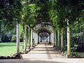 Jardim Botânico do Rio de Janeiro (3904003070).jpg