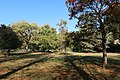 Jardin du Ranelagh, Paris 16e, automne 5.jpg