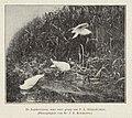 Johannes Eliza Rombouts (1843-1913), Afb 000395000318.jpg