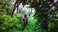 Jungle ride,Shuklaphanta National park.jpg