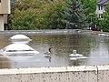 Karlstadt Mai 2004 Ente im Regen.jpg