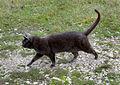 Katt-Kompis vid Brunnsporten Ringmuren Visby.jpg
