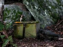 Soubor:Kea trying to open a trap to reach an egg.webm