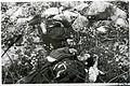 Kettle Lake corpses.jpg