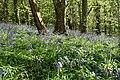 Kingston, in Wrinkle Wood - geograph.org.uk - 786531.jpg