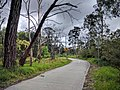 Koomba Park trail.jpg