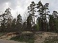 Krasnyy Khutir forest14.jpg