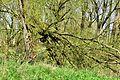 Kreis Pinneberg, Naturschutzgebiet 34 WDPA ID 30102 Haseldorfer Binnenelbe mit Elbvorland 13.jpg
