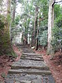 Kumano Kodo pilgrimage route Daimon-zaka World heritage 熊野古道 大門坂27.JPG