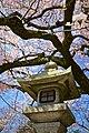 Kyoto, 桜, sakura, Eikandocho - panoramio (1).jpg