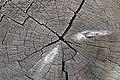 LOG BUTT DETAIL-UMATILLA (23851516691).jpg