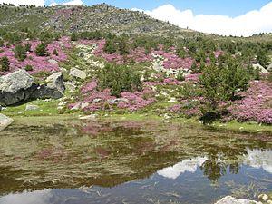 Lagunas del Castillo de Vinuesa.jpg