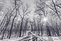 Lake Maria State Park in Winter, Minnesota - Black and White (23551579524).jpg