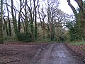 Lane through woods to Stowford - geograph.org.uk - 1616846.jpg
