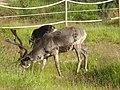 Lapland - Urho Kekkonen National Park - 20180728173243.jpg