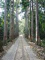Lawachara National Park Srimongol Sylhet Bangladesh 13.JPG