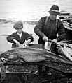 Le pere et le fils depecant la morue en Gaspesie - 1943.jpg