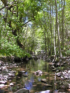 Smith Creek (Arroyo Hondo tributary)