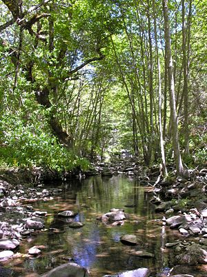 Smith Creek (Santa Clara County, California) - View upstream of Smith Creek at Mt. Hamilton Road crossing with California bay laurel and white alder, courtesy of Robert A. Leidy PhD, U.S. EPA