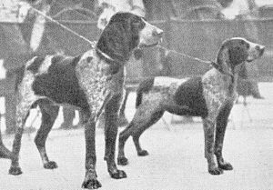 Burgos Pointer - Two Burgalese Pointers (c. 1932).