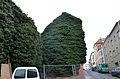 Lierre pignon urbain Gand 2015 01.JPG