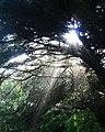 Light on the Glade (155455123).jpg