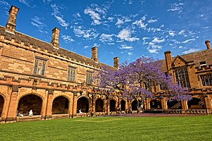 Jacaranda, University of Sydney - The jacaranda in the main quadrangle at the University of Sydney (2014)