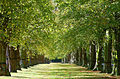 Lime Tree Avenue, Clumber Park, Nottinghamshire.jpg