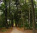 Linden path in the museum of M. Pirogov - Липовая аллея в музее-усадьбе Пирогова - panoramio.jpg