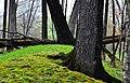 Lizard Mound State Park - panoramio.jpg