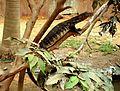 Lizard by Sudipta Chakraborty.jpg