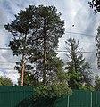 Lobnya, Moscow Oblast, Russia - panoramio (270).jpg