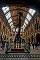 London - Cromwell Road - Natural History Museum 1881 by Alfred Waterhouse - Entrance Hall - View North on the Central Hall, dominated by a Diplodocus I.jpg