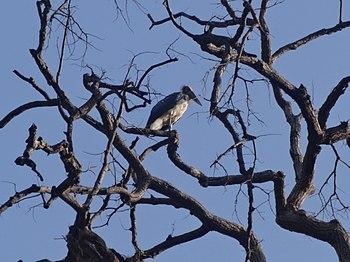 Long Beak Bird.jpg