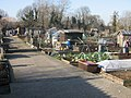 Lower Road allotments, Orpington - geograph.org.uk - 724922.jpg