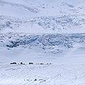 MK04457 Athabasca Glacier Icefields Parkway (Jasper NP).jpg