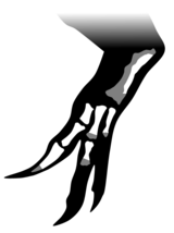 Diagram showing fragmentary dinosaur hand and arm bones